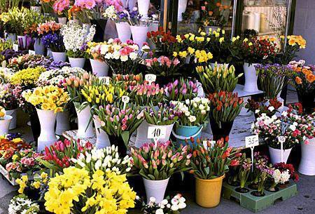 flowers-magazine